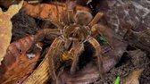 Zázračná planeta   Neuvěřitelní tvorové zvířecí říše (1 Díl) CZ Dabing SUPER DOKUMENT!!! avi