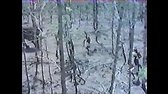 Tusk (Alejandro Jodorowsky, 1980) CD2 avi